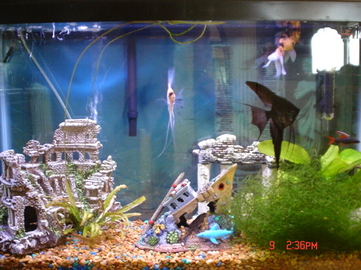38 gallons freshwater fish tank (mostly fish and non-living decorations) - I will have to take a better picture