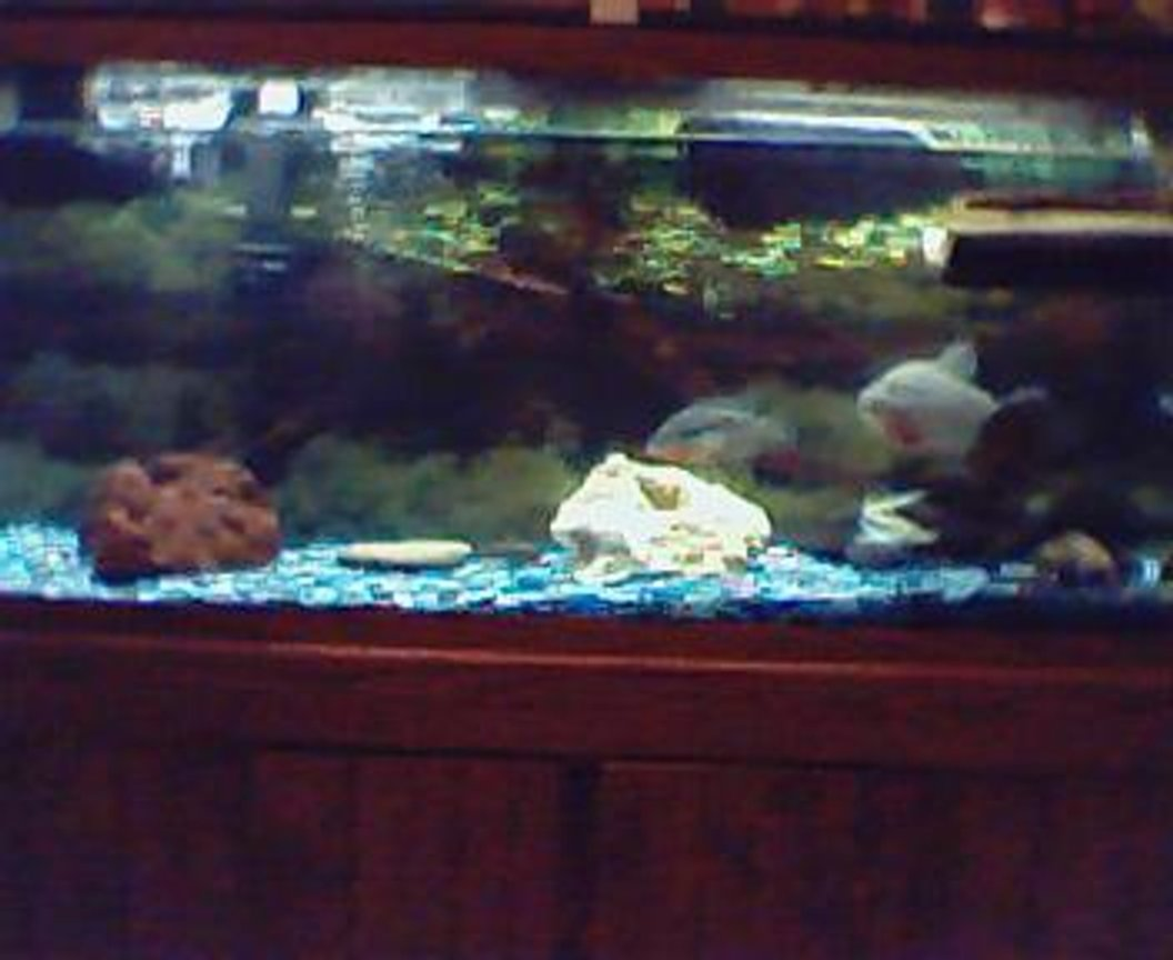 70 gallons freshwater fish tank (mostly fish and non-living decorations) - here's my tank