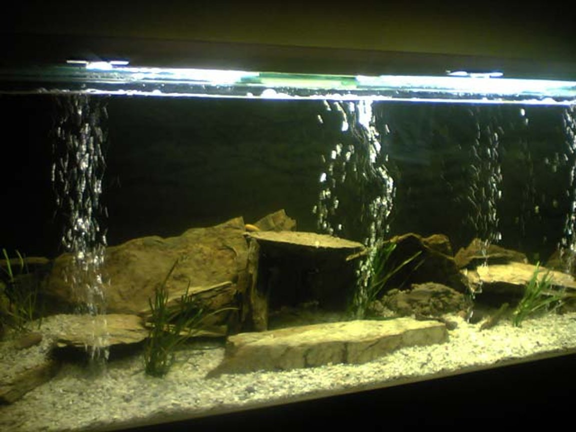 "80 gallons freshwater fish tank (mostly fish and non-living decorations) - 60""L x15""W x20""H Tank, Sonpar 1500Lph, 300w heater, 5foot single dalbarb fluro. 2x Electric Yellow Cichlids, 1x Male & 2x Female Electric Blues, 3x Yellow Tail Acies, 3x Crayfish, 1x Eel-tailed Catfish, 1x Brown-finned Eel."