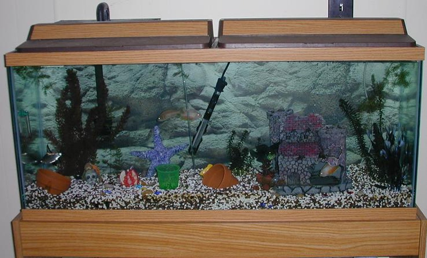 55 gallons freshwater fish tank (mostly fish and non-living decorations) - This is our 55 gallon tank