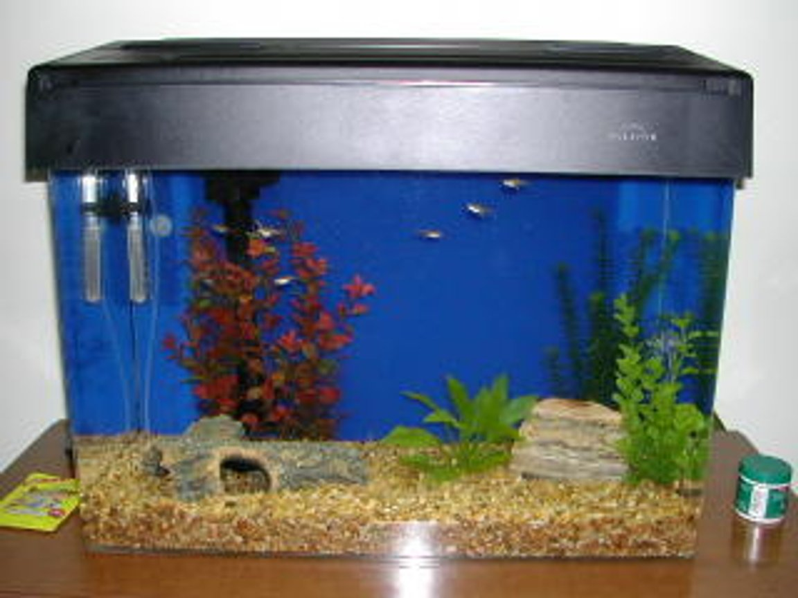 freshwater fish tank (mostly fish and non-living decorations) - sorry small tank biggy being made