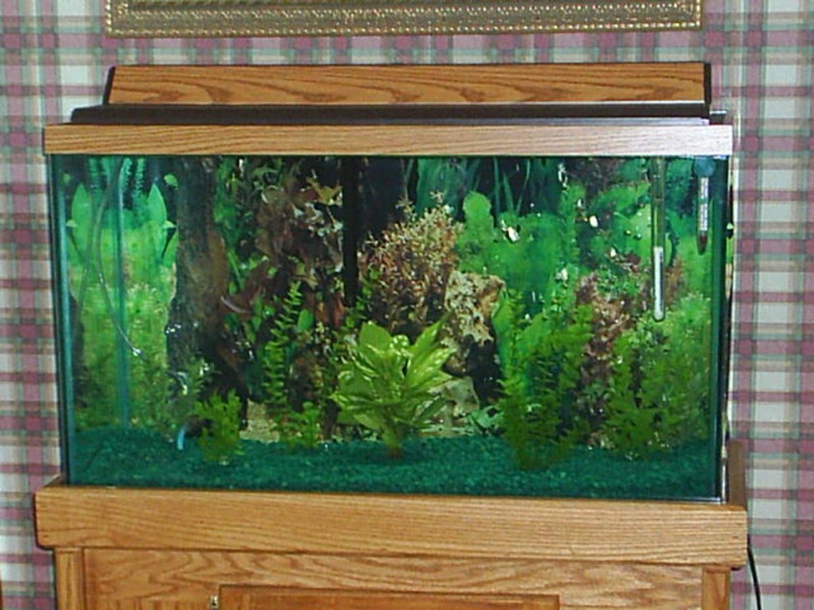 29 gallons freshwater fish tank (mostly fish and non-living decorations) - this tank has one large oscar and 2 small sucker fish it is a 29 gallon tank with a oak stand