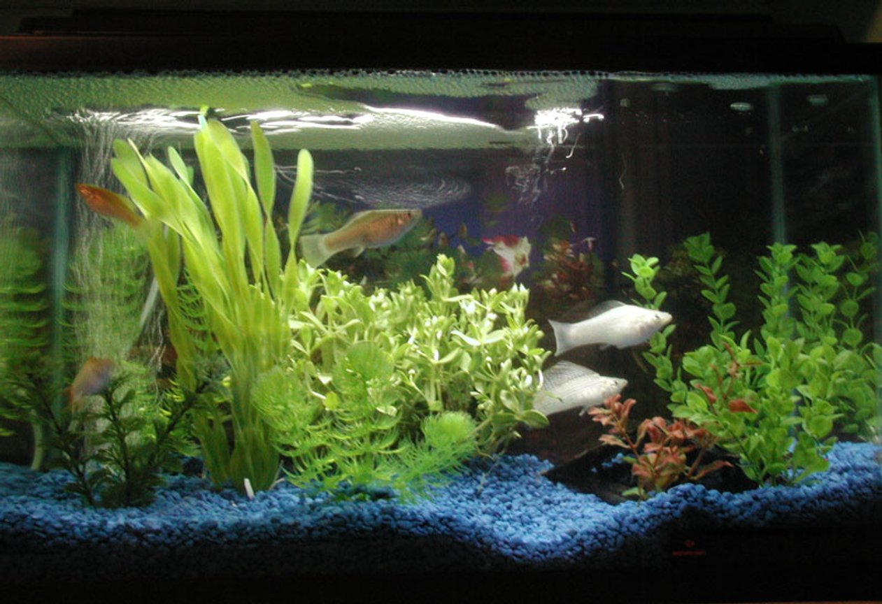 10 gallons freshwater fish tank (mostly fish and non-living decorations) - One of my 10 Gal tanks