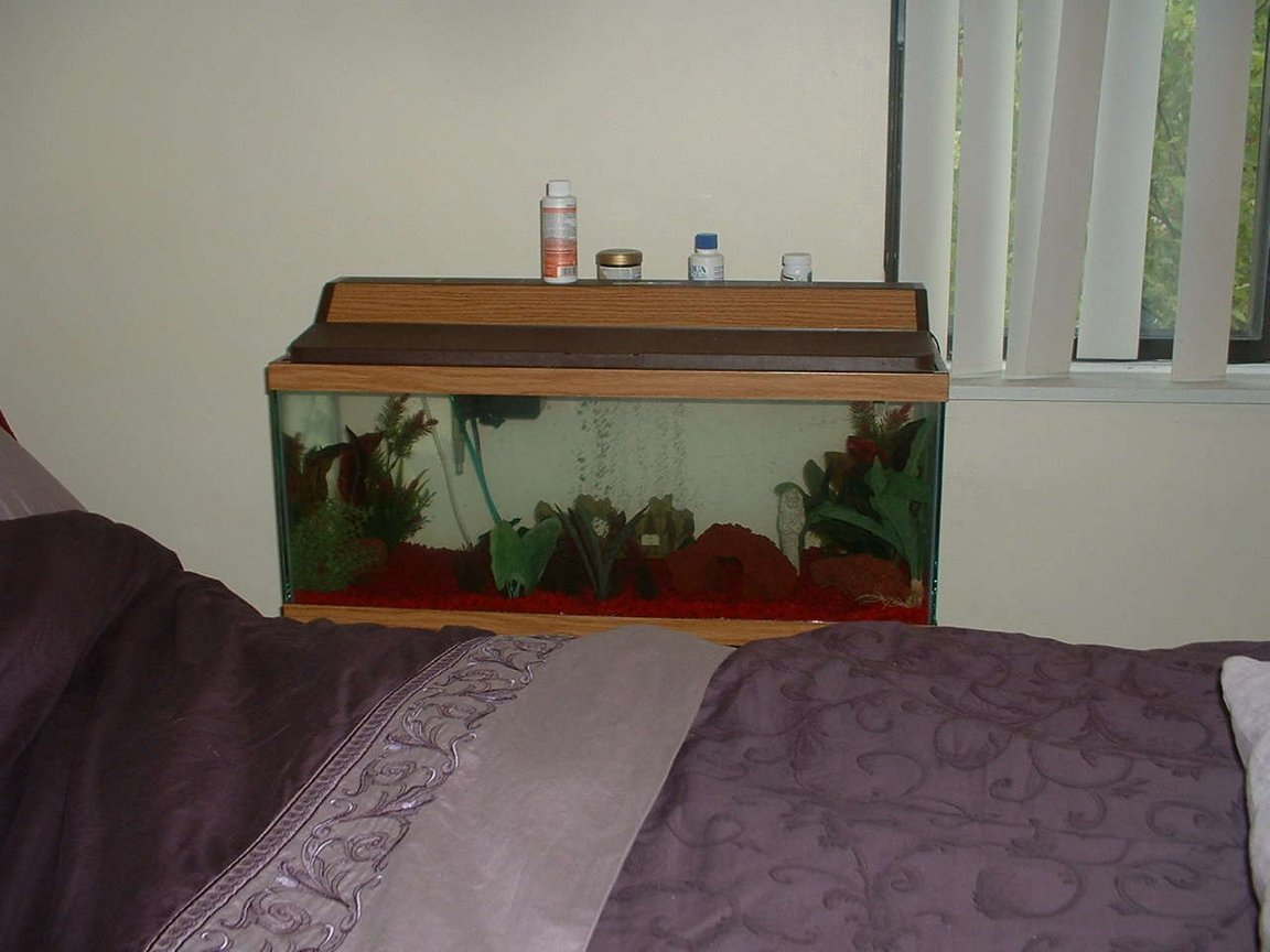 20 gallons freshwater fish tank (mostly fish and non-living decorations) - Pic of my 20 gal