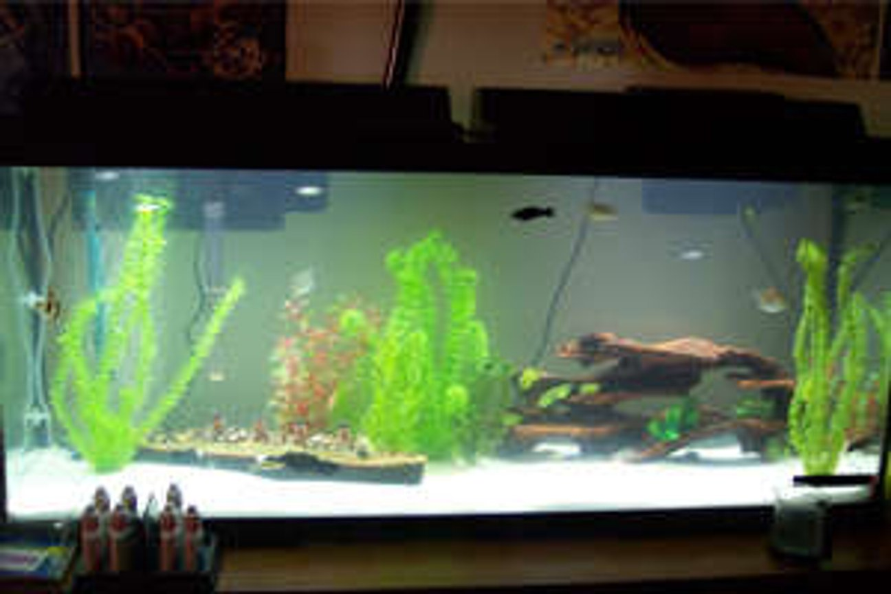 100 gallons freshwater fish tank (mostly fish and non-living decorations) - Simple 55g Generic. Marine Land filter and heater. Air pump. Plastic deco. White sand Sub straight. Dual lighting. 1 Zebra Danio 2 Long Fin Rainbow Danios 3 Tiger Barbs 1 Panther Catfish 1 Plecos 2 dinosaur birchirs 1 African Leaf Fish 1 Spotted Green Tetraodon (puffer) 2 Red Fin Black Sharks 1 Fiddler Crab