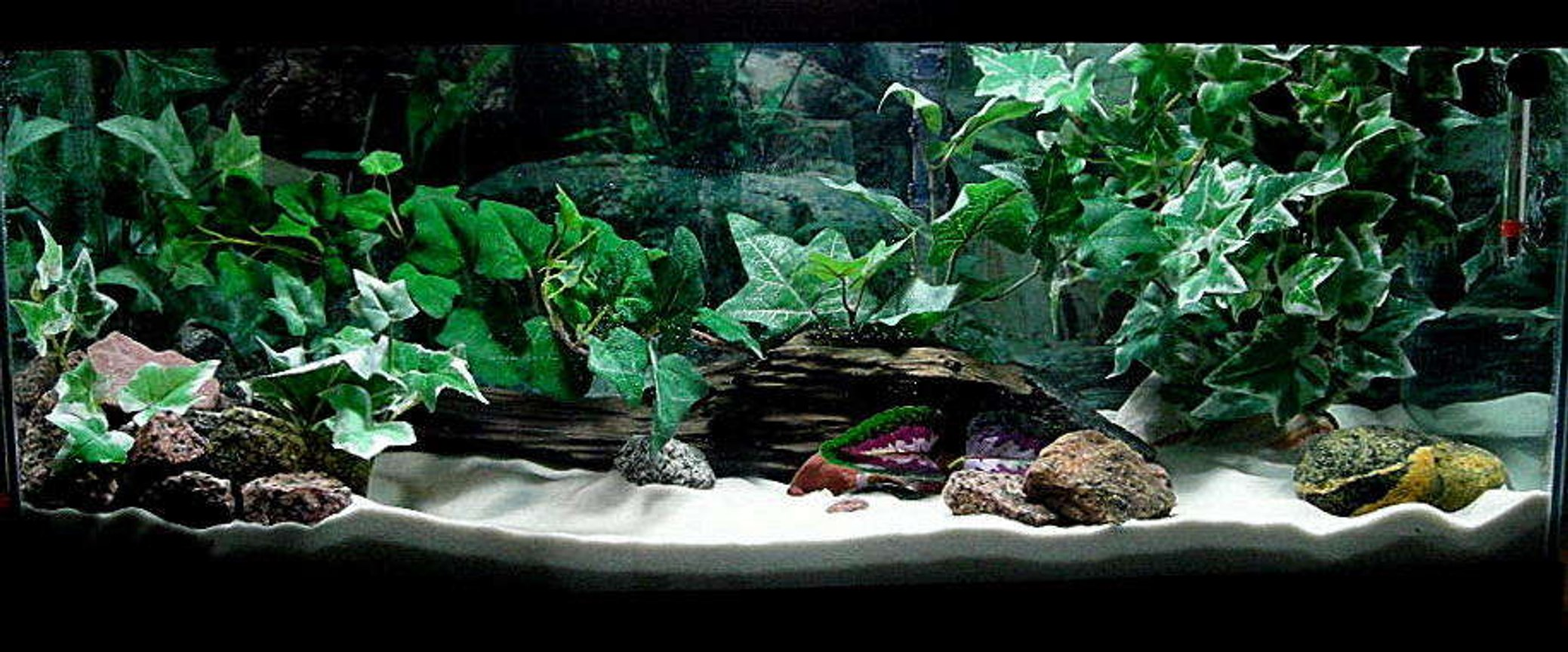 20 gallons freshwater fish tank (mostly fish and non-living decorations) - If you do not give this tank a high rating please tell me why and what you think it needs.. Thanks.