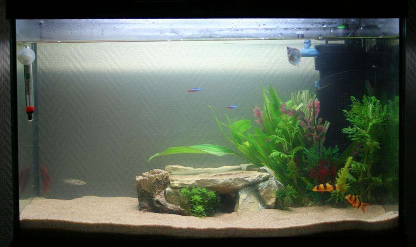 1 gallon freshwater fish tank (mostly fish and non-living decorations) - Funky tank with a discus cave