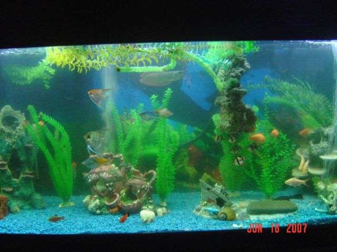 220 gallons freshwater fish tank (mostly fish and non-living decorations) - 220 gallon freshwater tank