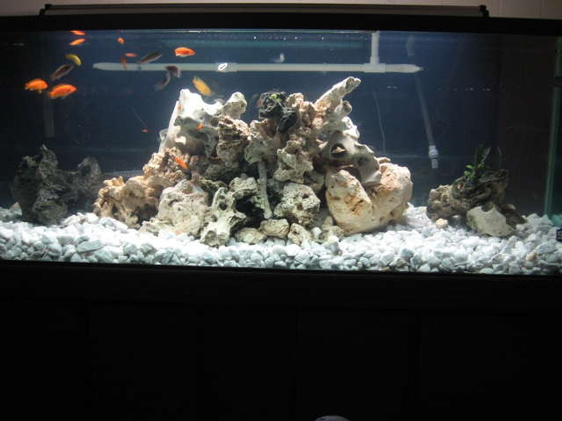 32767 gallons freshwater fish tank (mostly fish and non-living decorations) - 180Gallon Malawi reef tank.