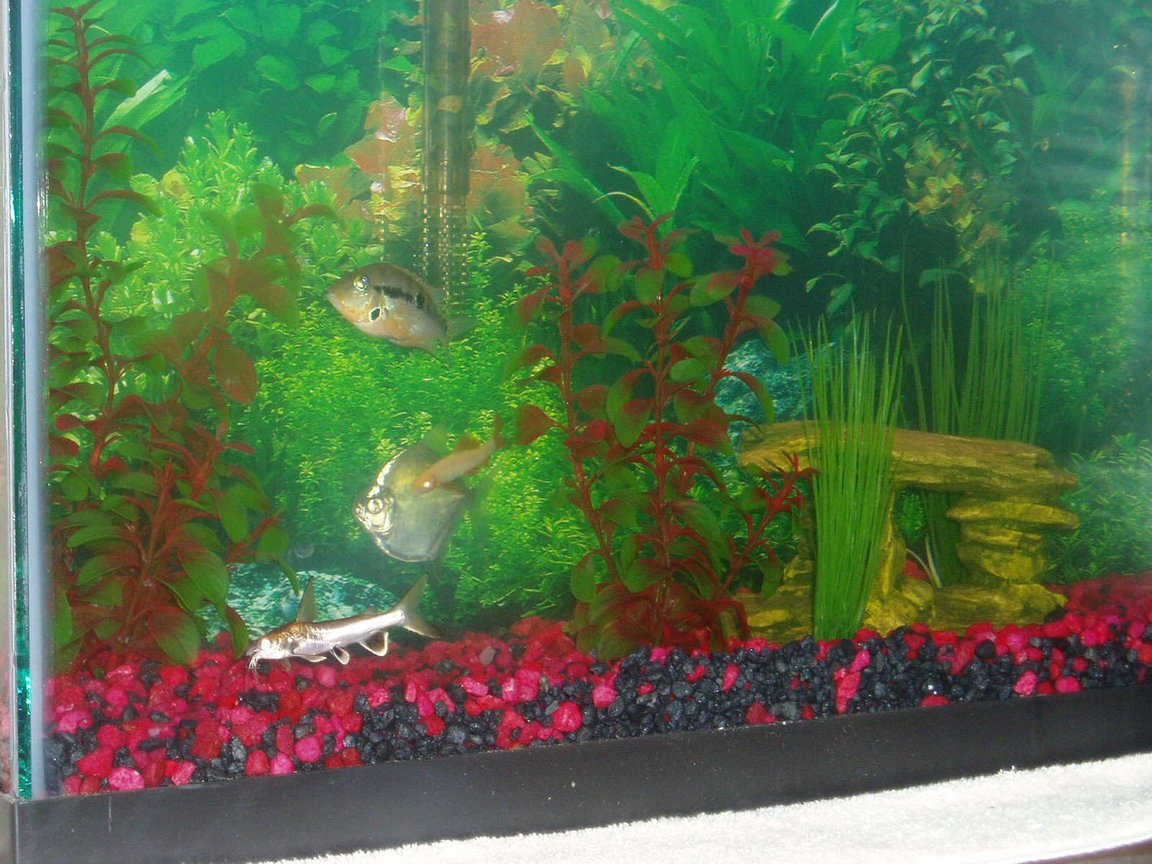 29 gallons freshwater fish tank (mostly fish and non-living decorations) - 29 gal. tank