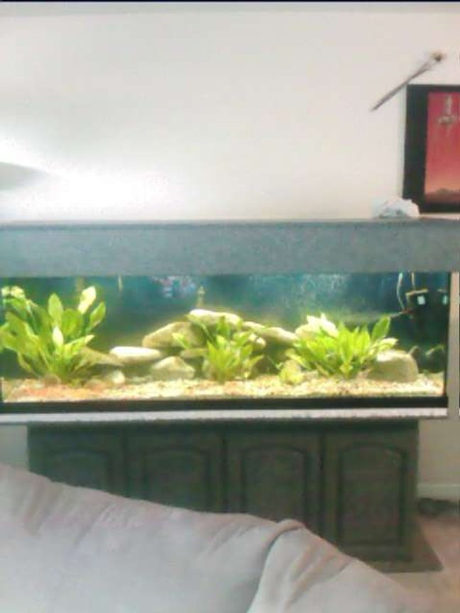 125 gallons freshwater fish tank (mostly fish and non-living decorations) - clear view white and blue light same tank