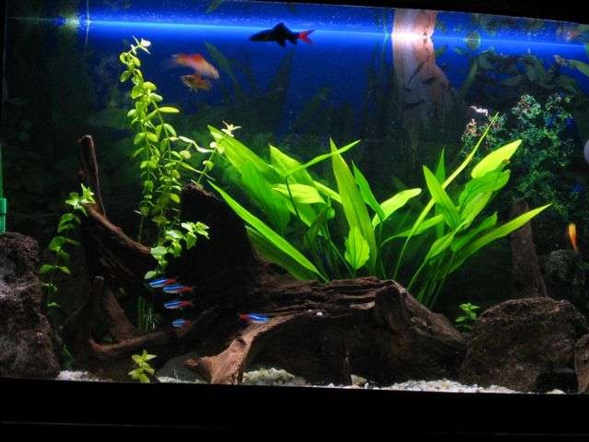20 gallons freshwater fish tank (mostly fish and non-living decorations) - my tank - 20 gallon