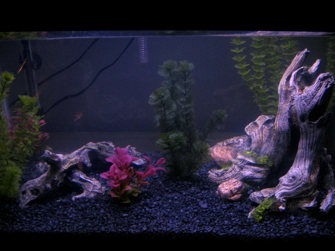 20 gallons freshwater fish tank (mostly fish and non-living decorations) - My Second Fish Tank!!