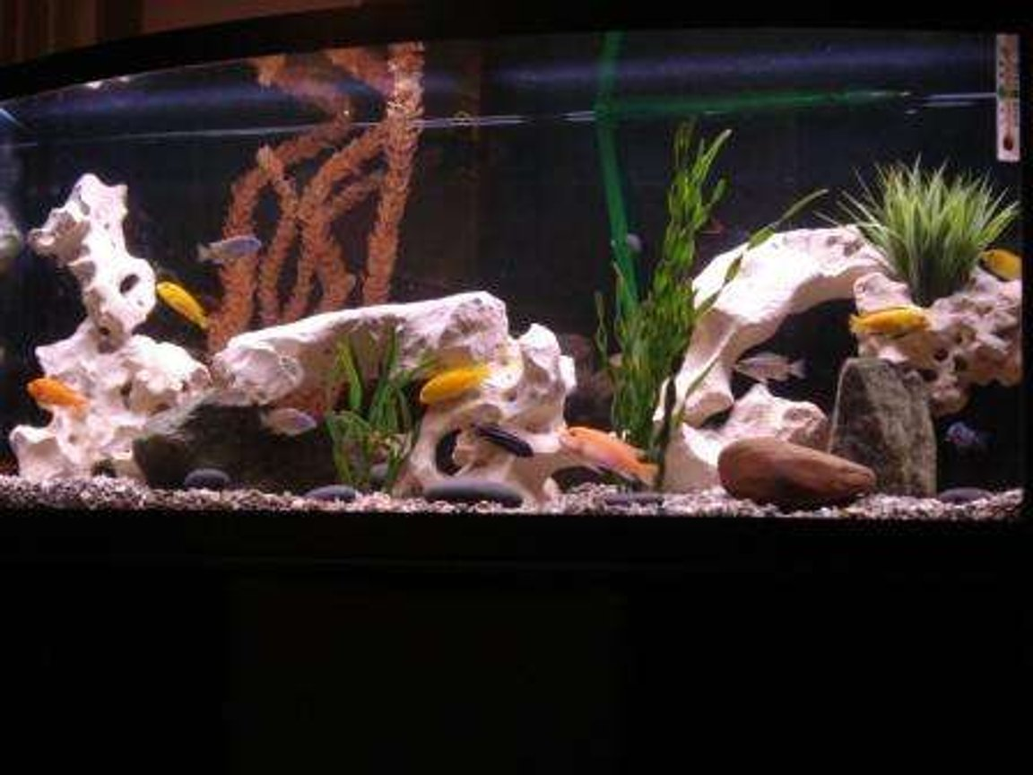75 gallons freshwater fish tank (mostly fish and non-living decorations) - African Cichlid 75 Gallon tank, 18 Cichlids and 2 Sharks.