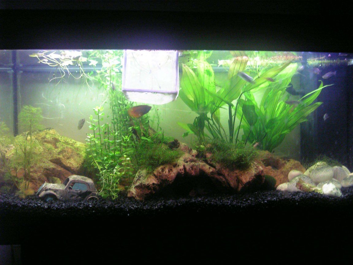 35 gallons freshwater fish tank (mostly fish and non-living decorations) - my tank