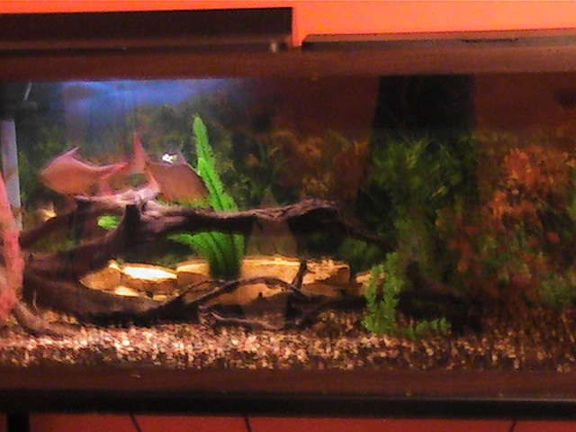 55 gallons freshwater fish tank (mostly fish and non-living decorations) - 55 gallon tank with six tin foil barbs.
