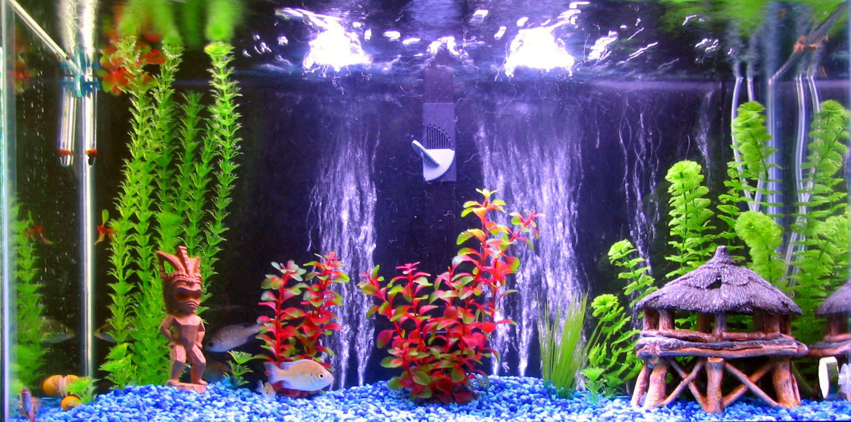 30 gallons freshwater fish tank (mostly fish and non-living decorations) - 30gal Freshwater