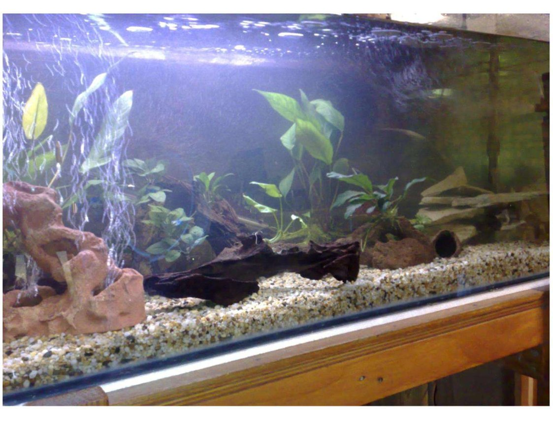 70 gallons freshwater fish tank (mostly fish and non-living decorations) - 4ft