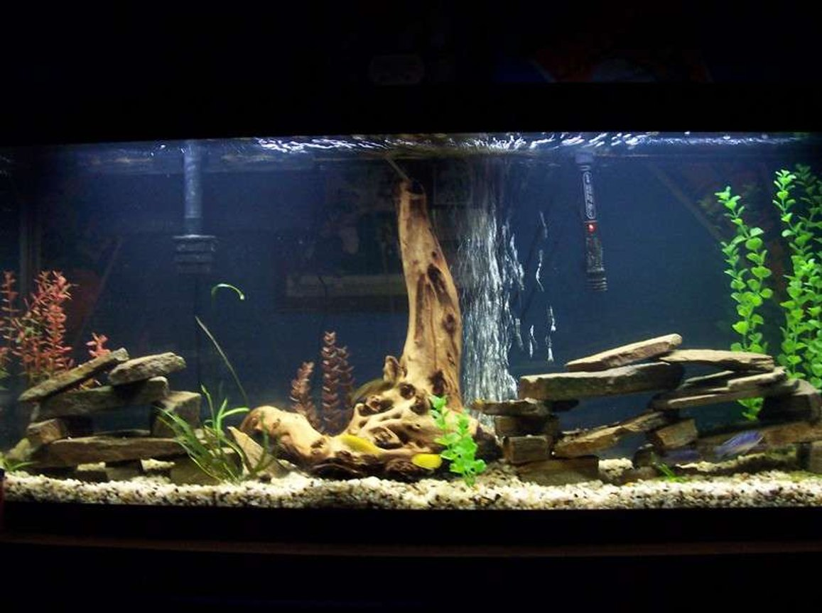 55 gallons freshwater fish tank (mostly fish and non-living decorations) - 55g african cichlid tank. kinda bad view from far away but can see some details. is much bigger then appears. rocks stacked as caves for my 8 various african cichlids. leave me some comments or suggestions. cichlids are making many nests in the gravel and are getting pretty big