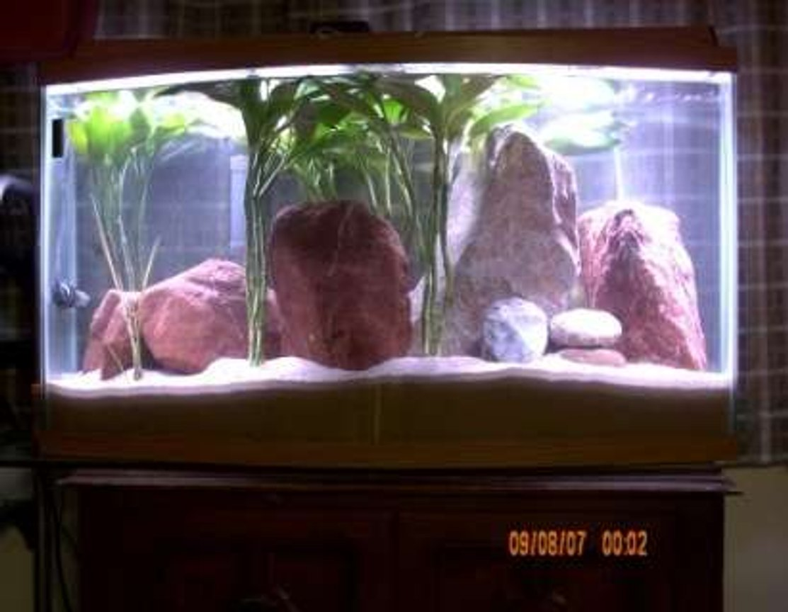 40 gallons freshwater fish tank (mostly fish and non-living decorations) - Puffer Tank With Light On.