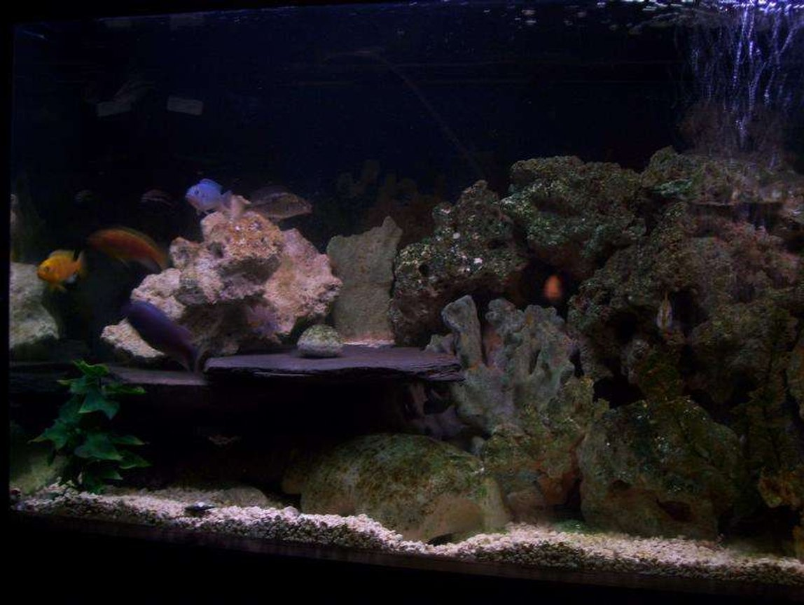 75 gallons freshwater fish tank (mostly fish and non-living decorations) - one side. i have more pics