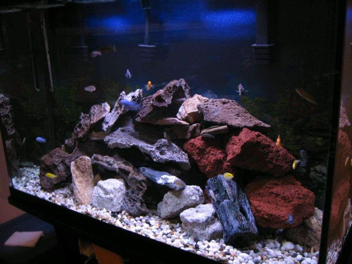 115 gallons freshwater fish tank (mostly fish and non-living decorations) - my chiclid tank
