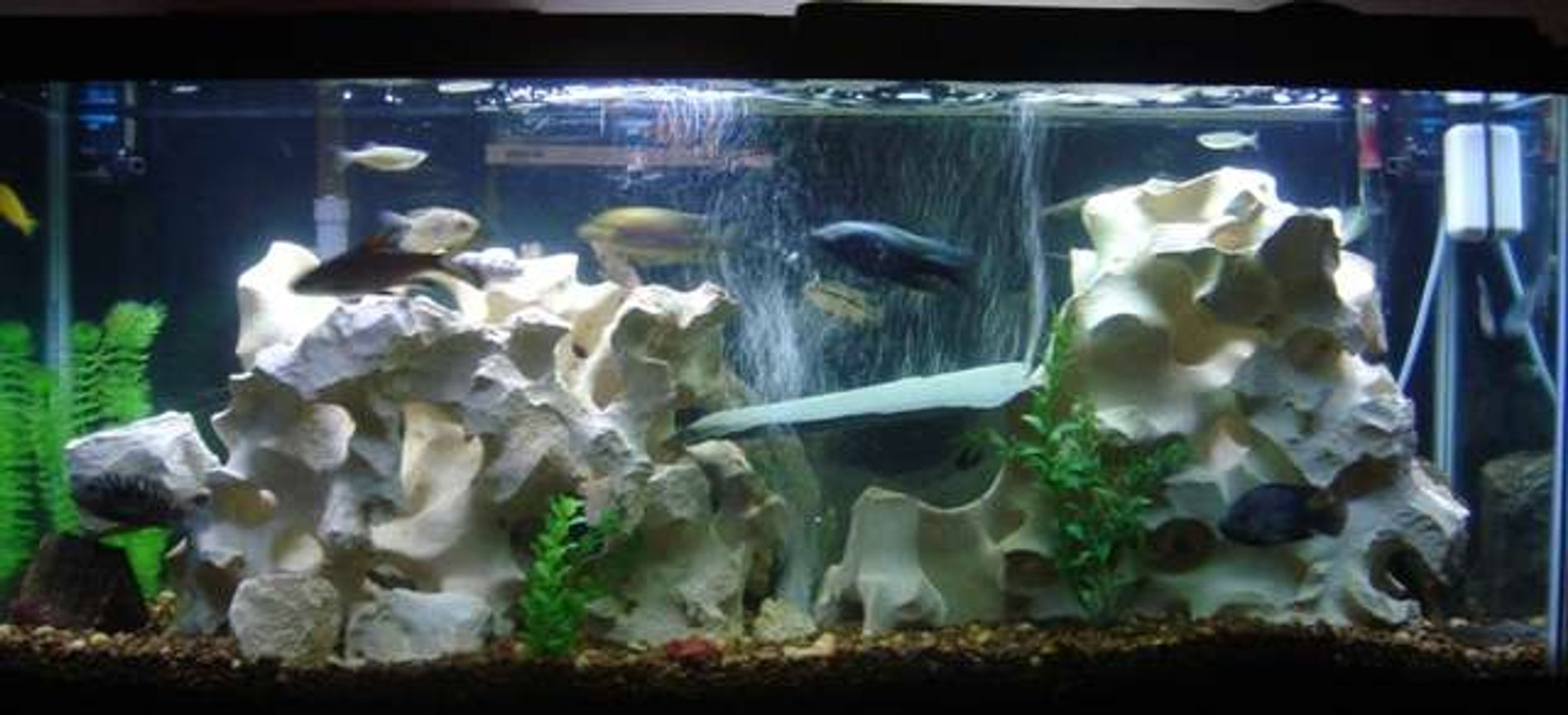 55 gallons freshwater fish tank (mostly fish and non-living decorations) - 55 Gallon Tank w/mostly chilids