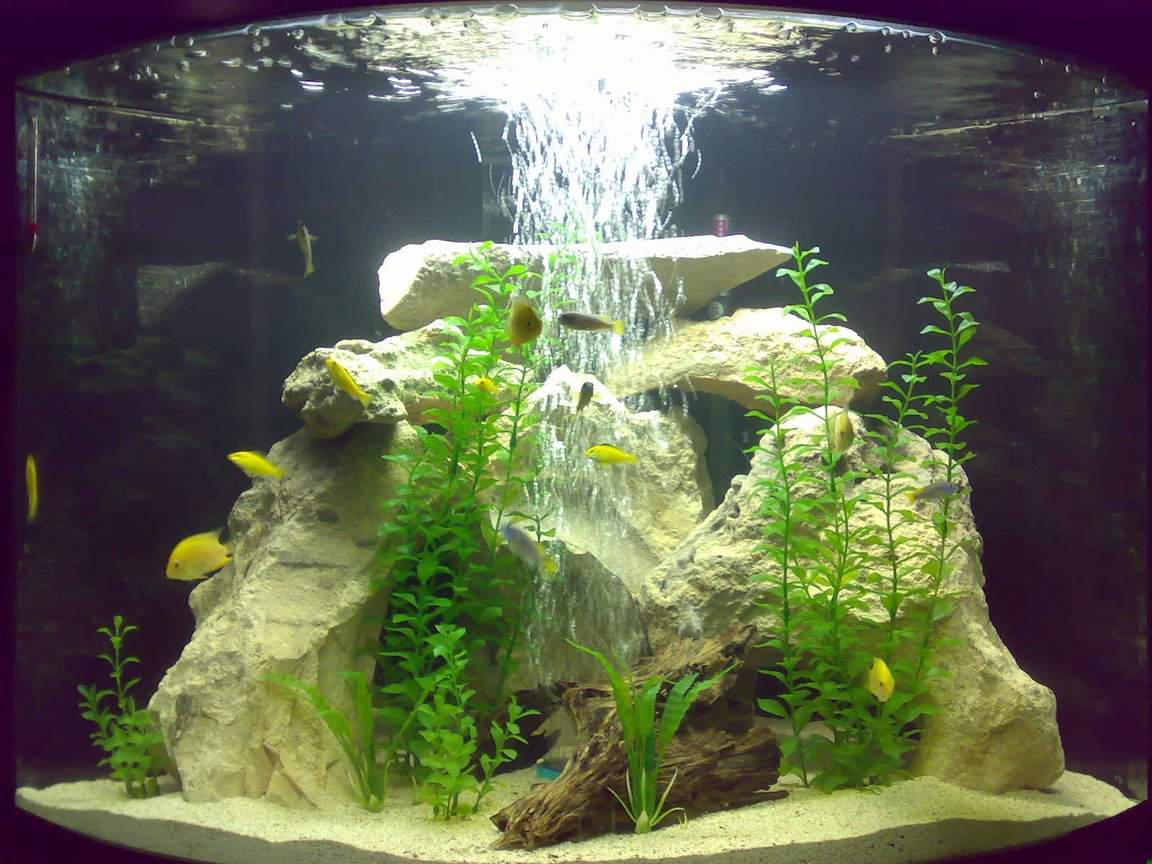 48 gallons freshwater fish tank (mostly fish and non-living decorations) - MY FISH TANK 2 Gold Severums 2 Green Severums 5 Electric Yellows 5 Acies 2 Rainbow Sharks 2 Bristle nose