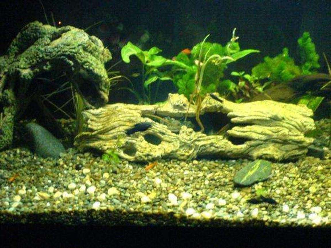 75 gallons freshwater fish tank (mostly fish and non-living decorations) - Help is appriciated..