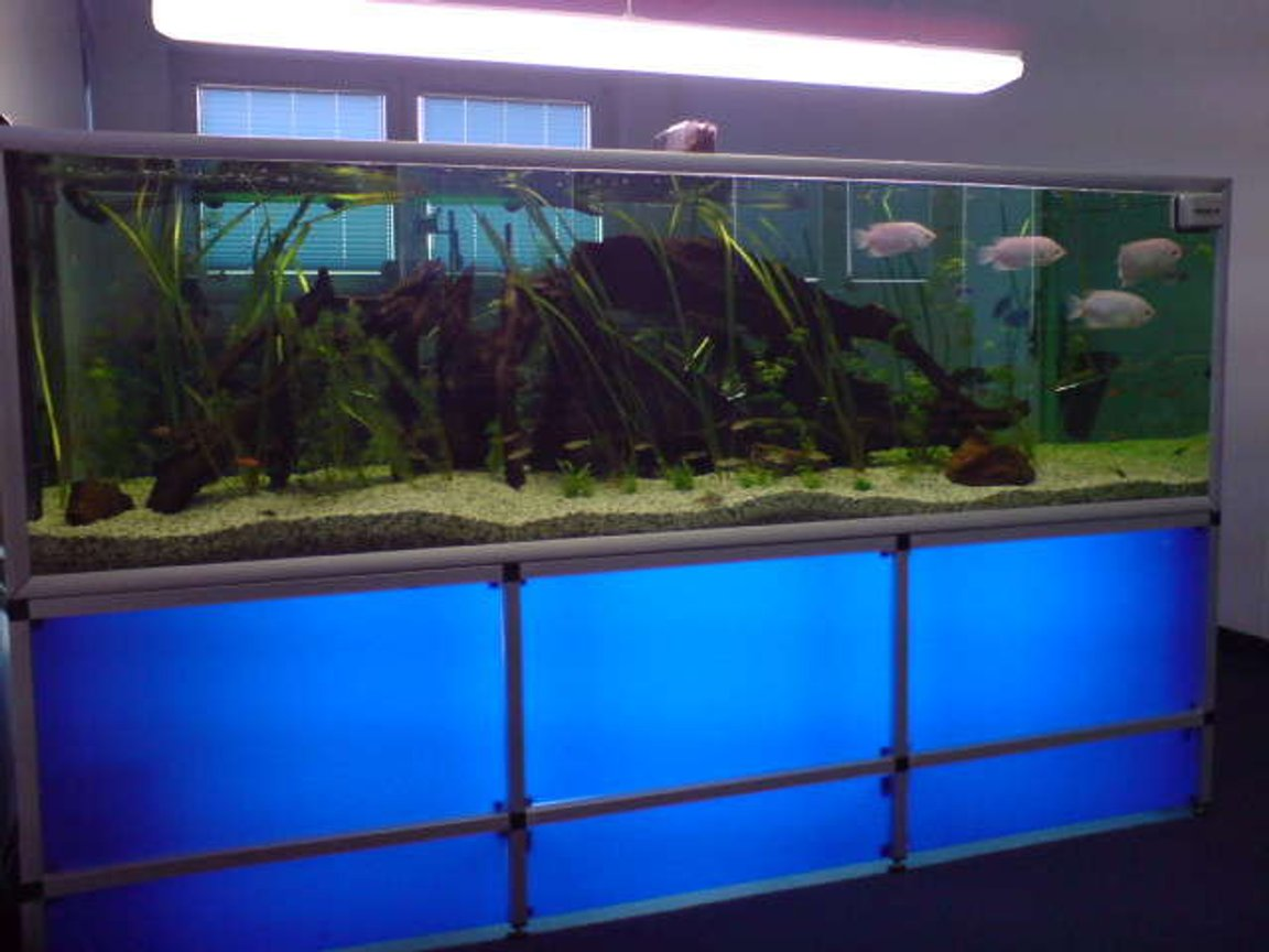 237 gallons freshwater fish tank (mostly fish and non-living decorations) - fishtank in a company!!
