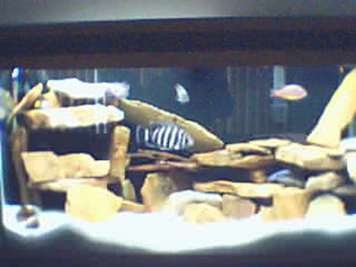 125 gallons freshwater fish tank (mostly fish and non-living decorations) - 90 gal yea I need a cam other than my web cam