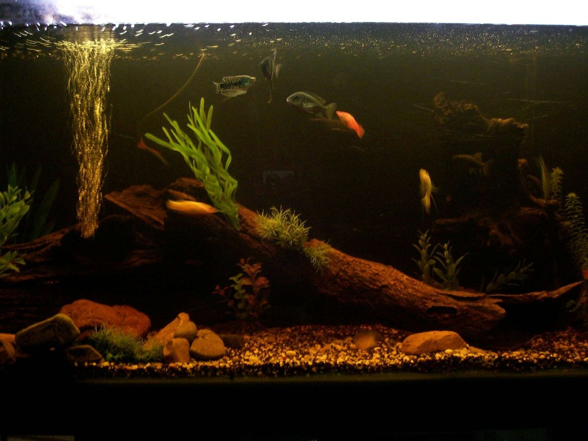 70 gallons freshwater fish tank (mostly fish and non-living decorations) - my 4ft tank with lots of fish tropicals mostly very nativ looking
