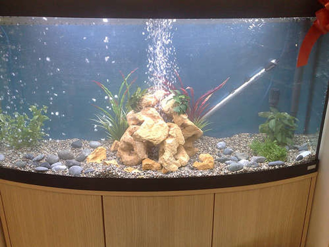 68 gallons freshwater fish tank (mostly fish and non-living decorations) - vicenza 260 tank with bubles what you think? rate me please