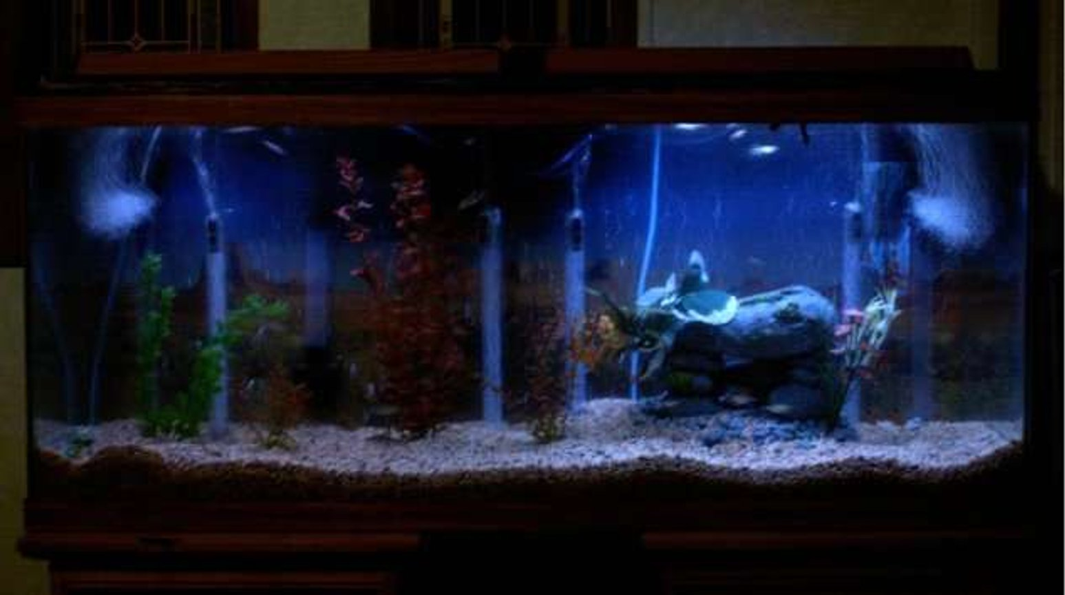 55 gallons freshwater fish tank (mostly fish and non-living decorations) - My tank at night will get better pic