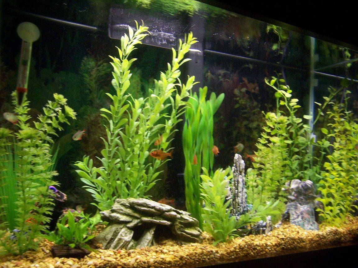 29 gallons freshwater fish tank (mostly fish and non-living decorations) - This is what the tank looked like before I tried live plants.