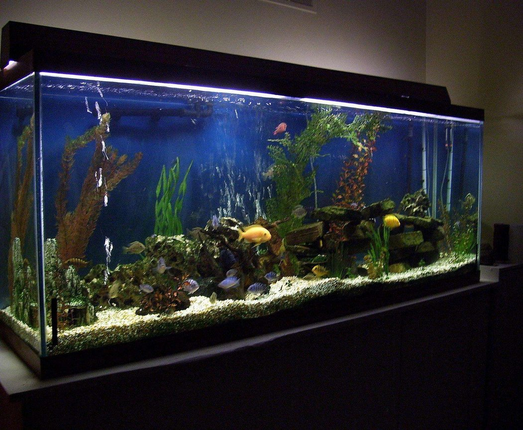 150 gallons freshwater fish tank (mostly fish and non-living decorations) - 150 gallon freshwater tank-african cichlids