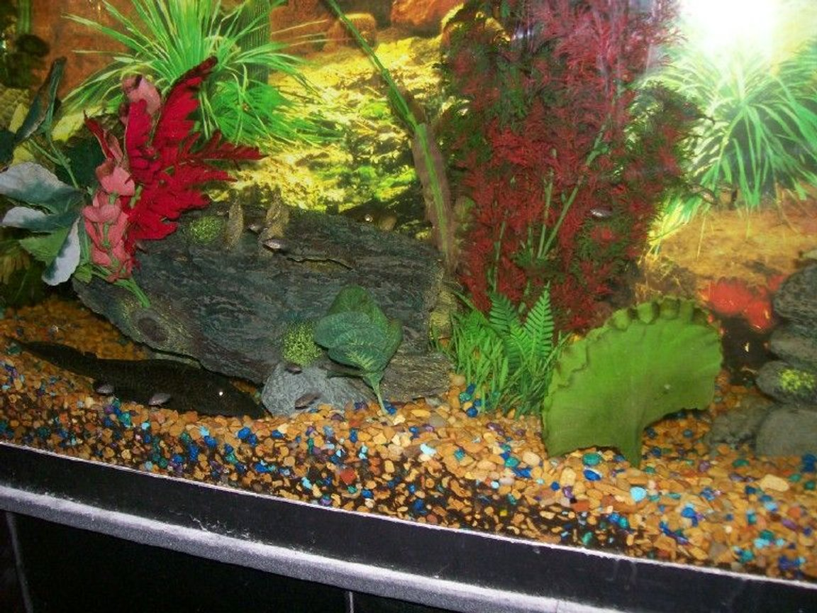 140 gallons freshwater fish tank (mostly fish and non-living decorations) - more pics of redhead/wolf babies