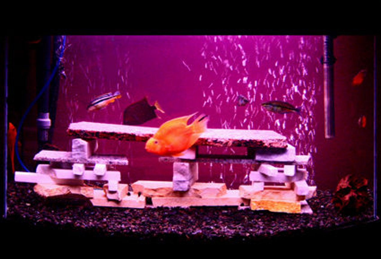 12 gallons freshwater fish tank (mostly fish and non-living decorations) - Mixed Granite Stone freshwater chiclid aquarium.