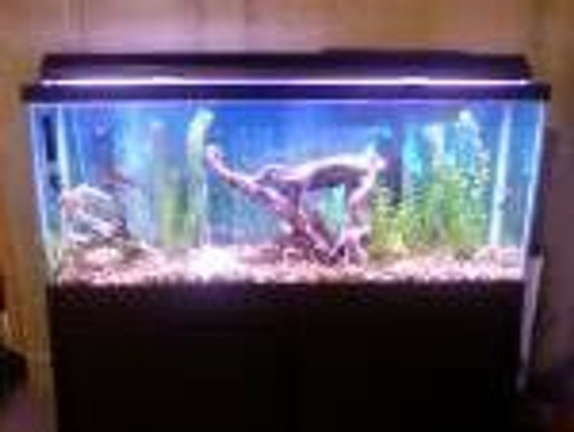 55 gallons freshwater fish tank (mostly fish and non-living decorations) - its my 1st tank