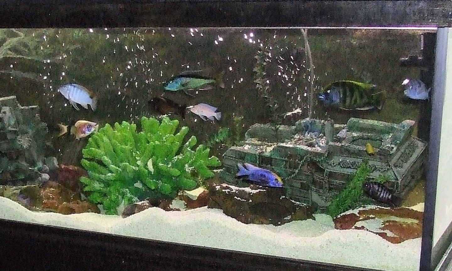 6 gallons freshwater fish tank (mostly fish and non-living decorations) - africans