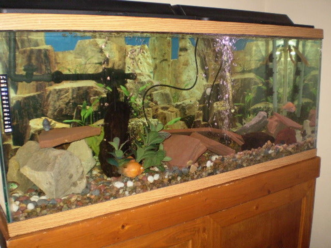 55 gallons freshwater fish tank (mostly fish and non-living decorations) - my 55 gal