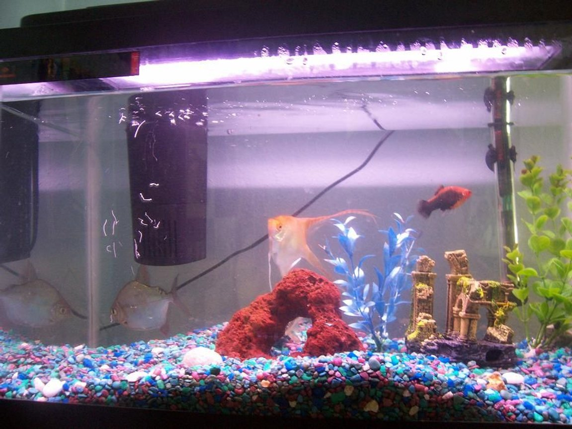 29 gallons freshwater fish tank (mostly fish and non-living decorations) - my 10 gallon i believe, in it i have a angel(not sure what exact kind) a silver dollar(large), a dwarf frog, and a few other fish