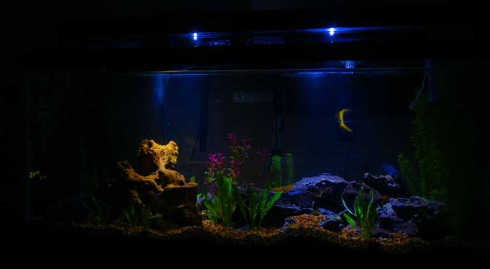 75 gallons freshwater fish tank (mostly fish and non-living decorations) - moonlight setting