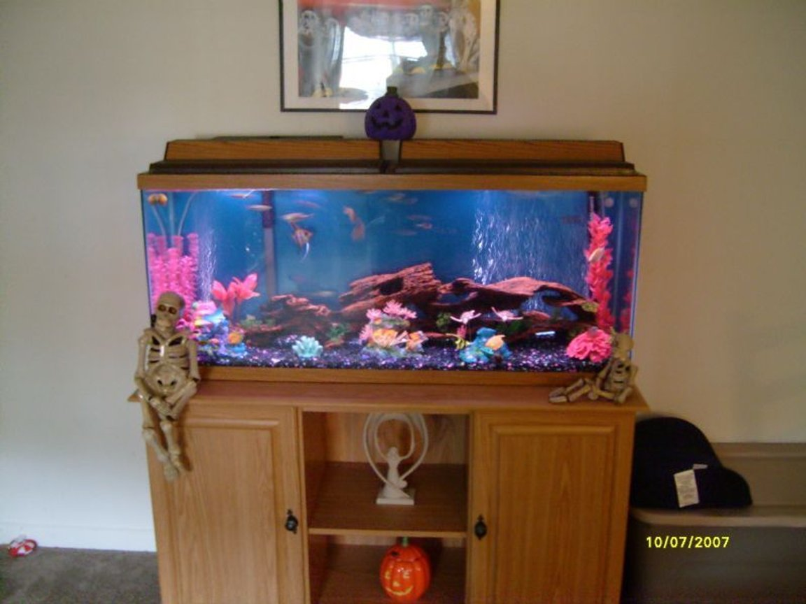 55 gallons freshwater fish tank (mostly fish and non-living decorations) - fish tank is crystal clear but picture is blurry