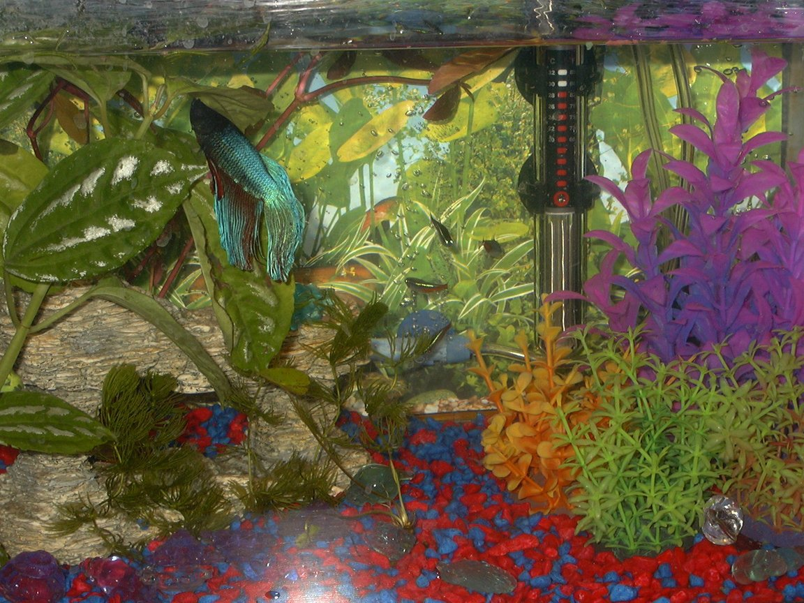 5 gallons freshwater fish tank (mostly fish and non-living decorations) - my heaven