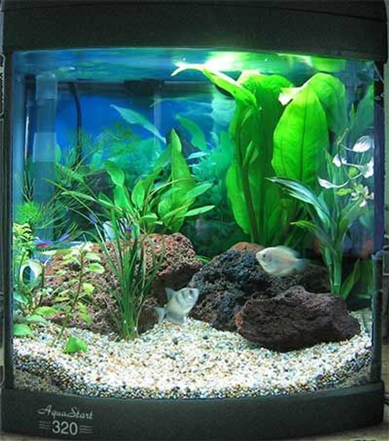 32 gallons freshwater fish tank (mostly fish and non-living decorations) - My totlay awesome fish fish tank!