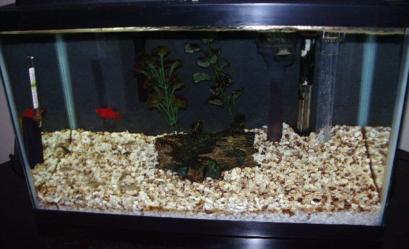 90 gallons freshwater fish tank (mostly fish and non-living decorations) - 10 gallon
