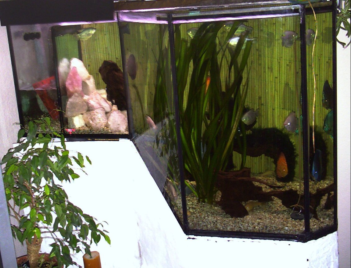 150 gallons freshwater fish tank (mostly fish and non-living decorations) - cant make my mind up what kind of theme it should run