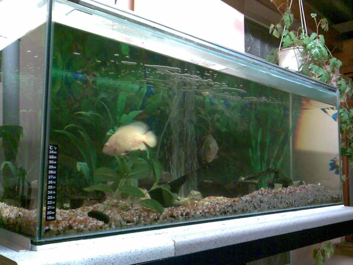 66 gallons freshwater fish tank (mostly fish and non-living decorations) - Up and running