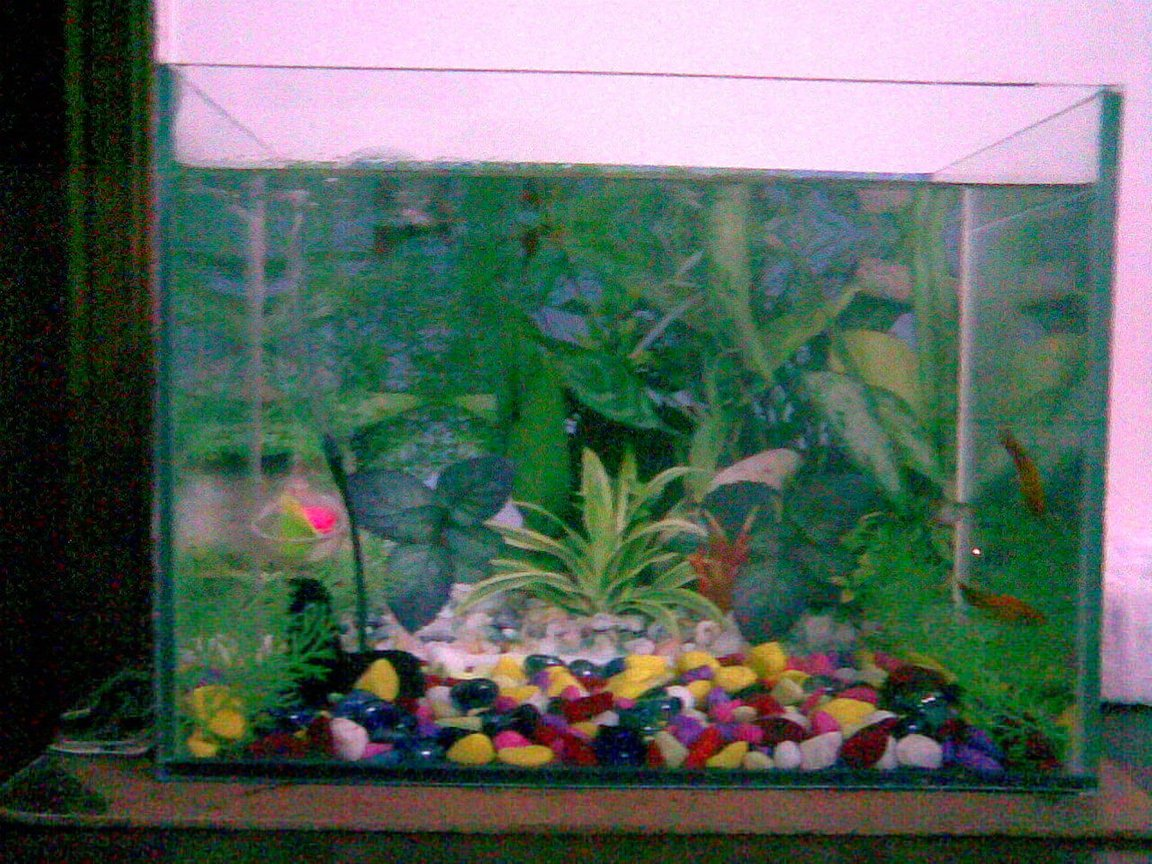 4 gallons freshwater fish tank (mostly fish and non-living decorations) - lkh